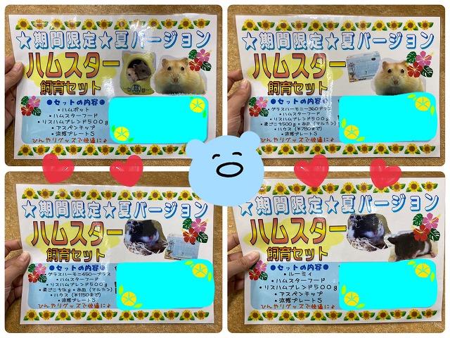 ☆夏の飼育セット、ハム編!!!