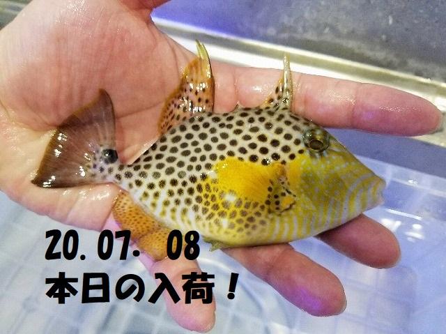 春日井店 海水ブログ 200708