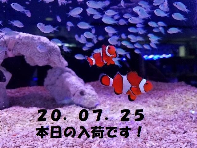 春日井店 海水ブログ 200725