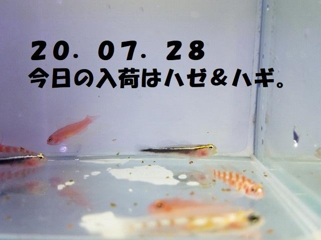 春日井店 海水ブログ 200728