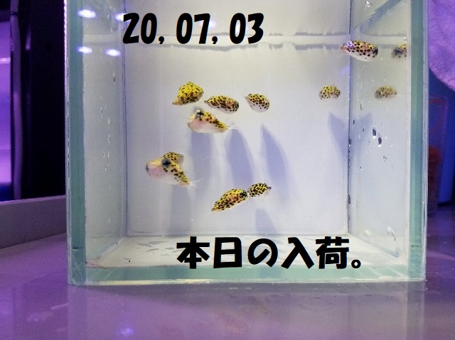 春日井店 海水ブログ 200703