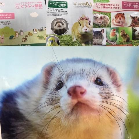 【インター小動物】アニコム損保のペット保険始めました。