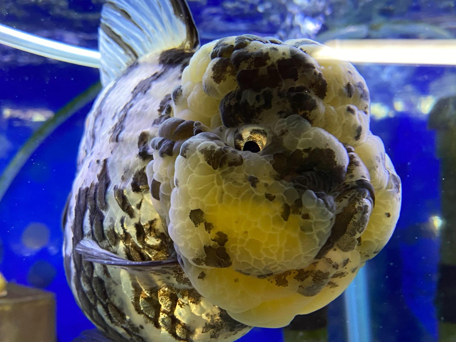 金魚もいっぱい♬