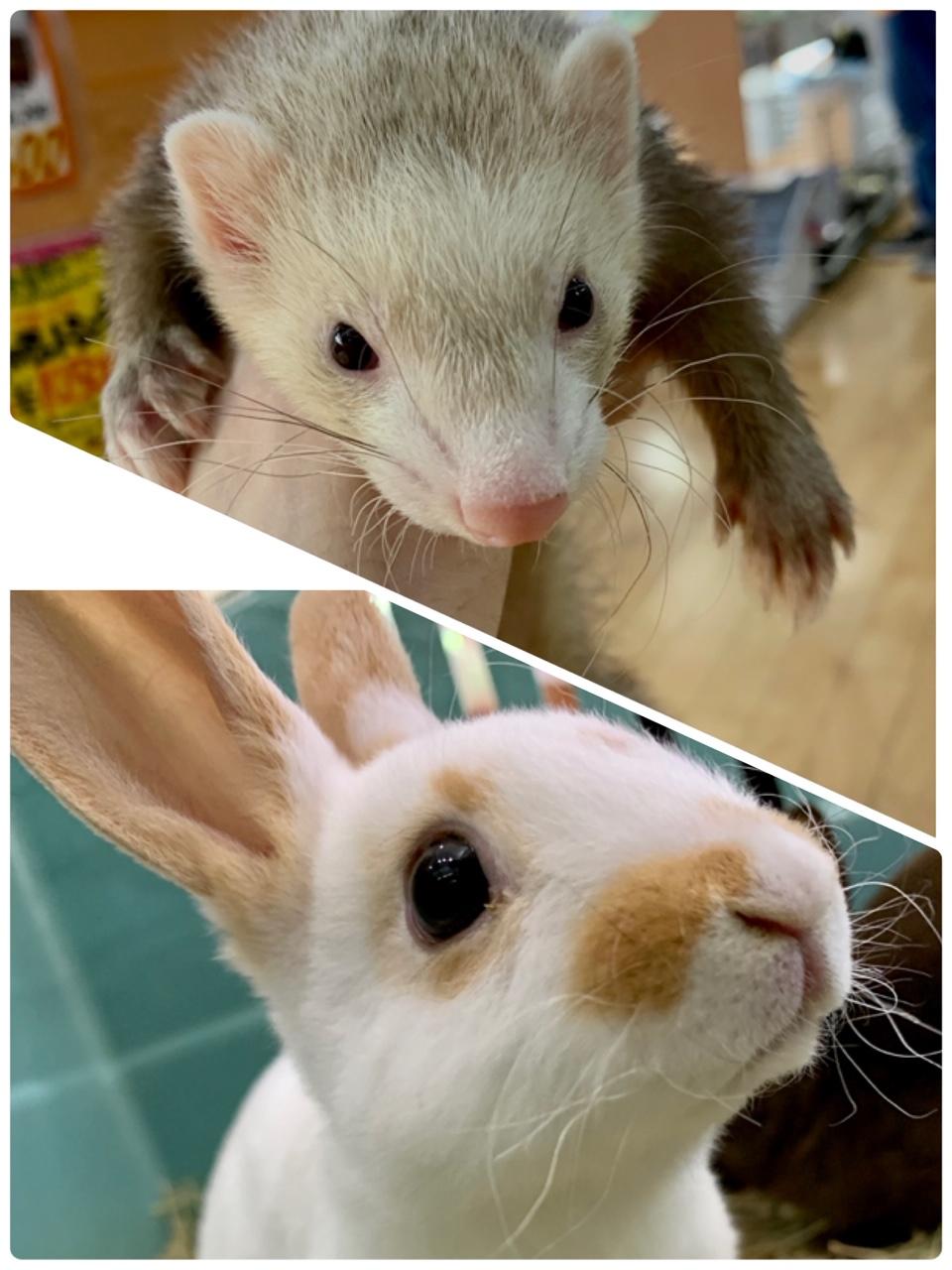 【春ペポニ】新着!イタチとウサギ