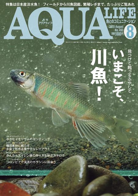 夏だ!川魚だ!