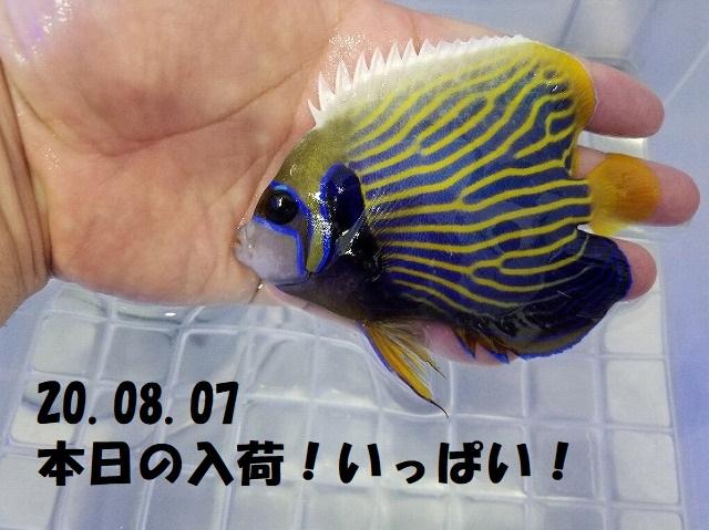 春日井店 海水ブログ 200807