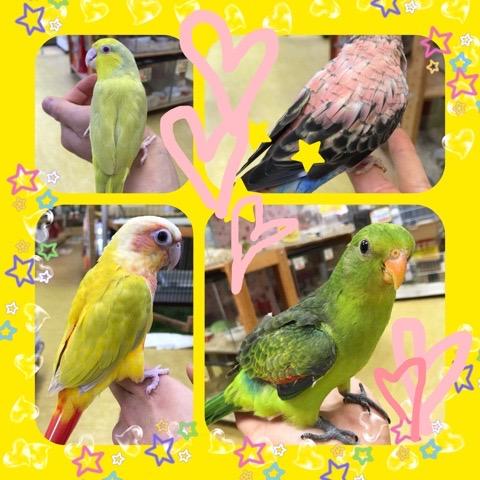 【インター小動物】超久々に!オススメ鳥類ご紹介~♪♪