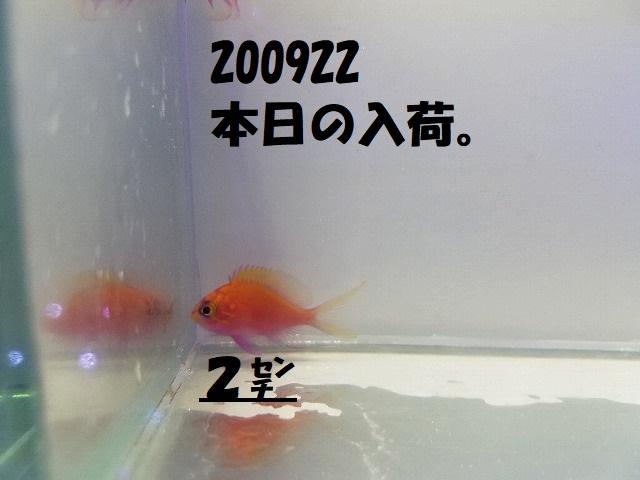 春日井店 海水ブログ 200922