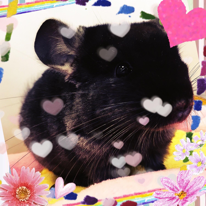 【インター小動物】新チラさん、いらっしゃい♪♪