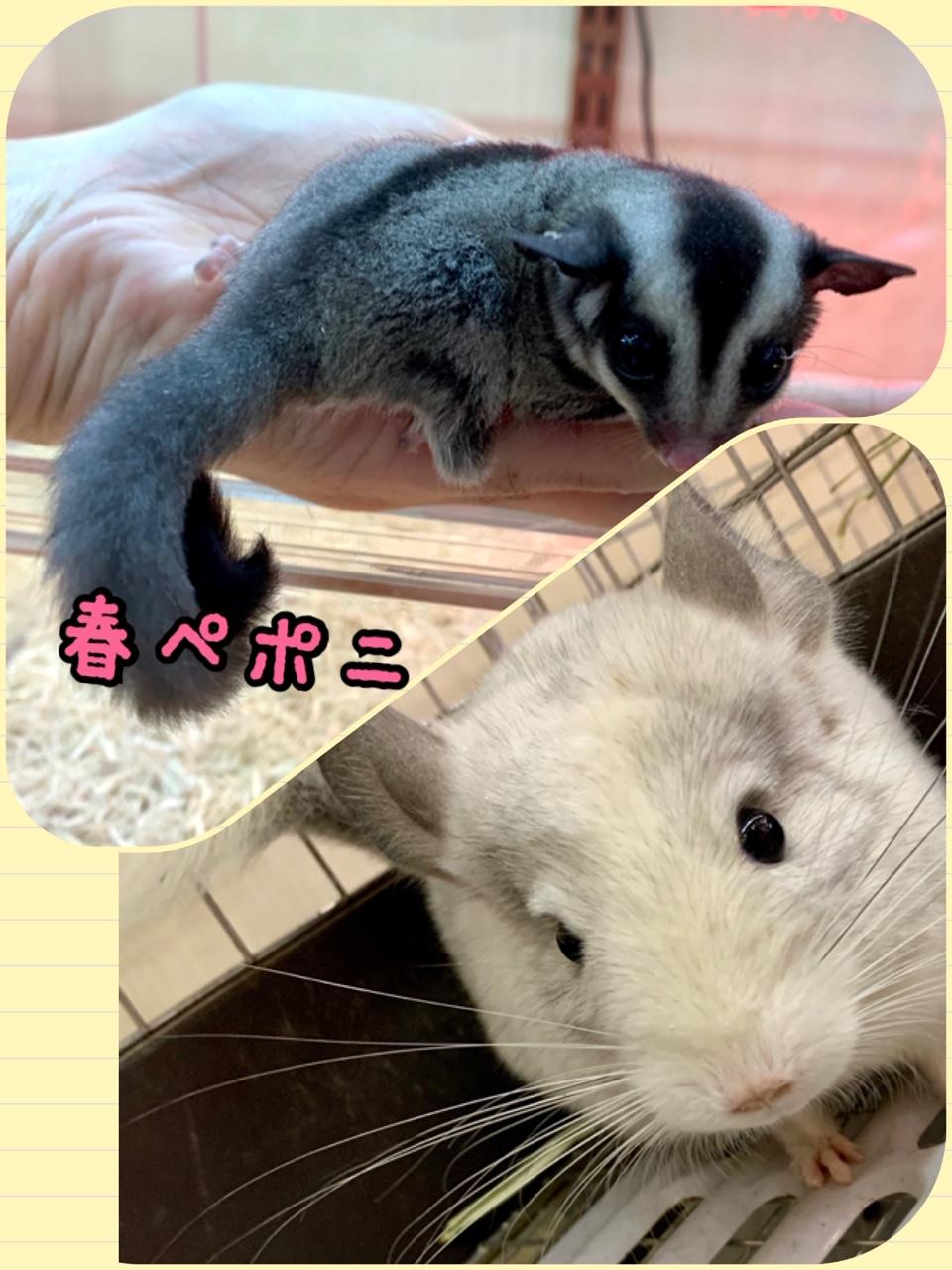 【春ペポニ】新着!人気の二柱!!