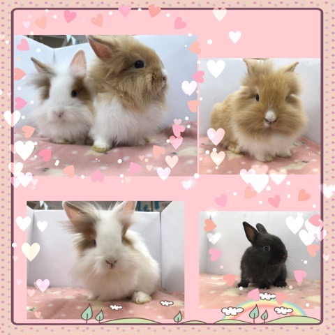 【インター小動物】可愛いウサギが揃い踏み!!パート①