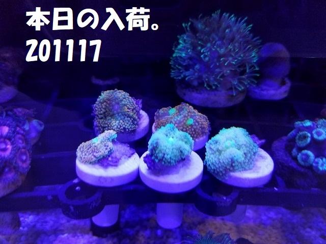 春日井店 海水ブログ 201117