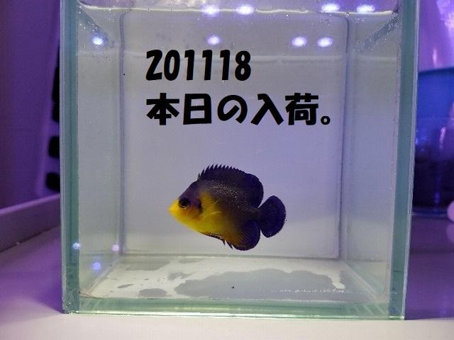 春日井店 海水ブログ 201118