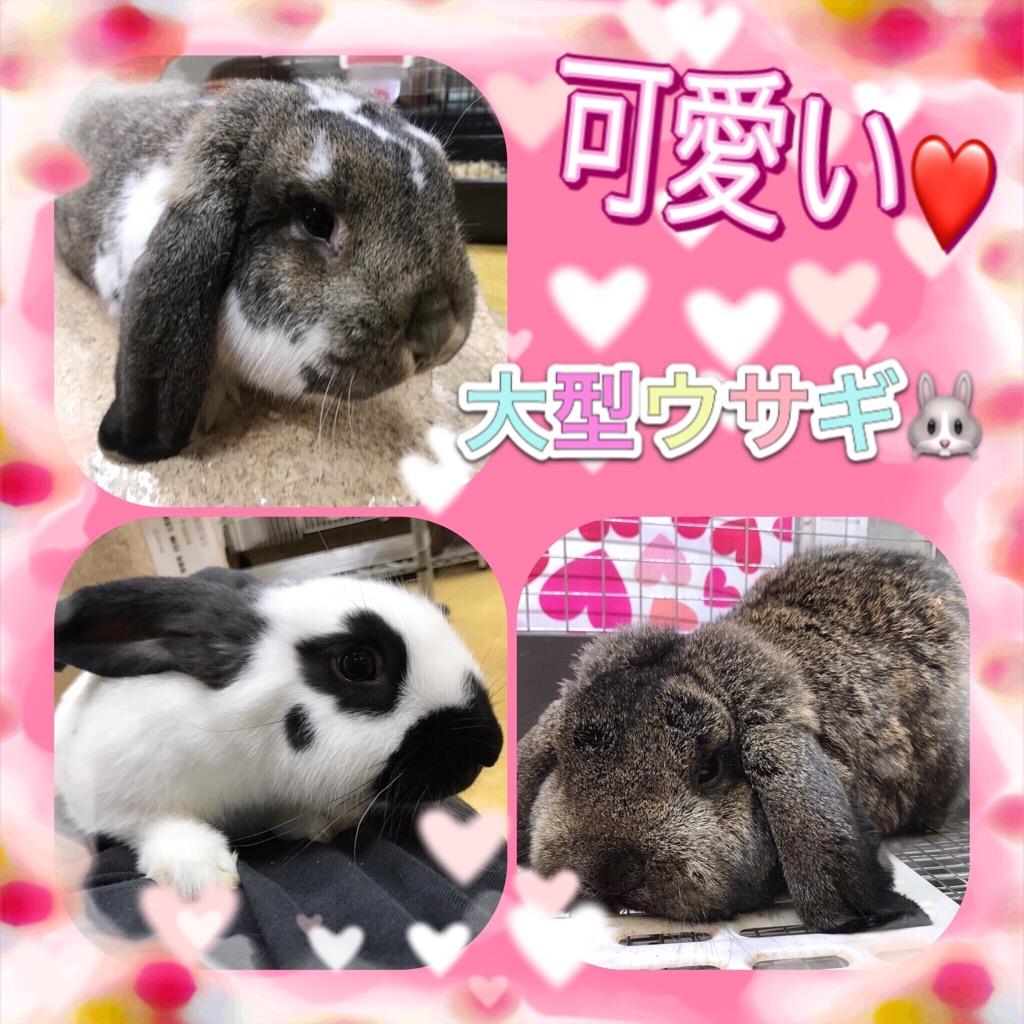 【インター小動物】可愛いウサギが揃い踏み!!パート②