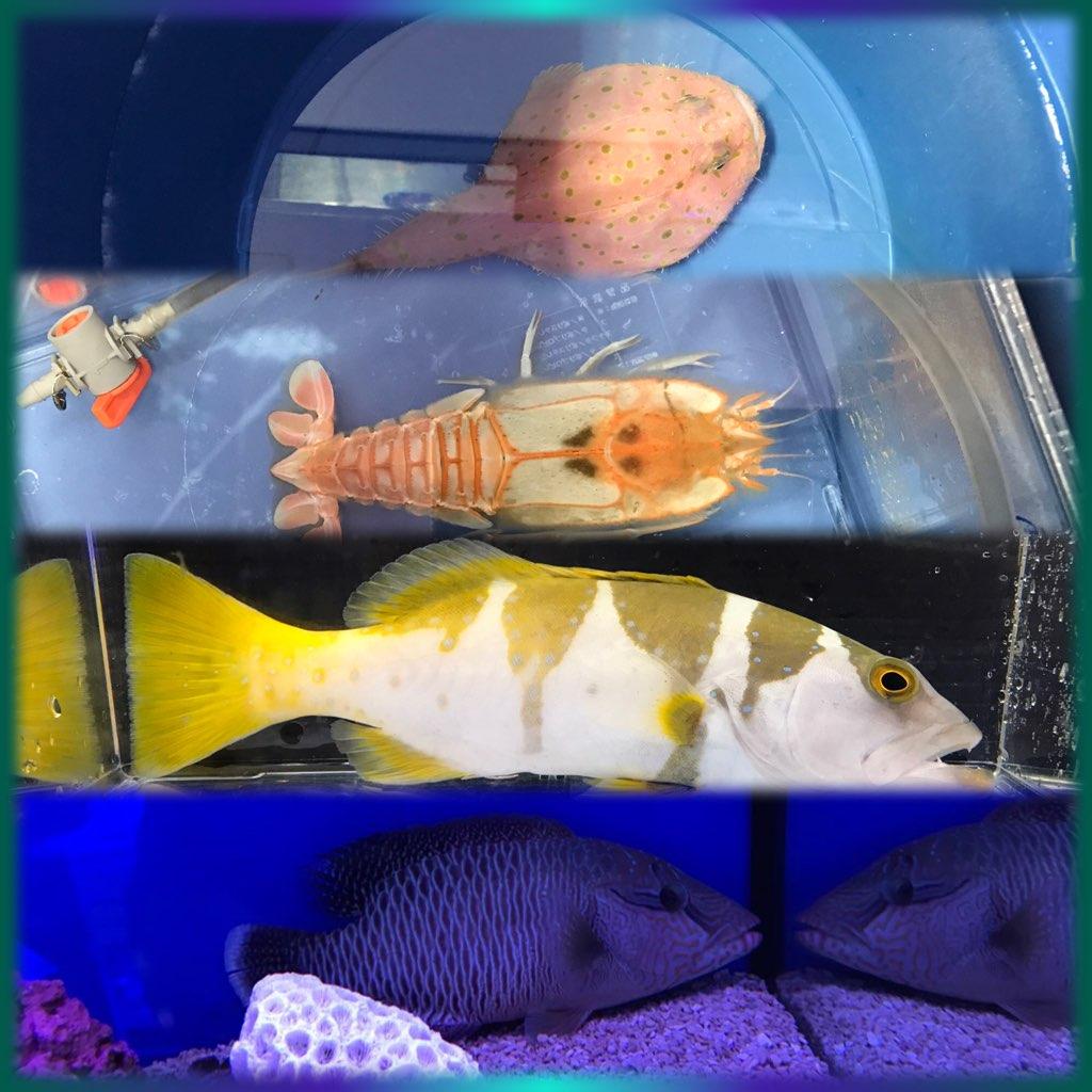 巨魚と深海魚