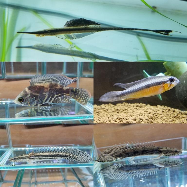 12月18日 新入荷 春日井熱帯魚