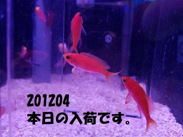 春日井店 海水ブログ 201204