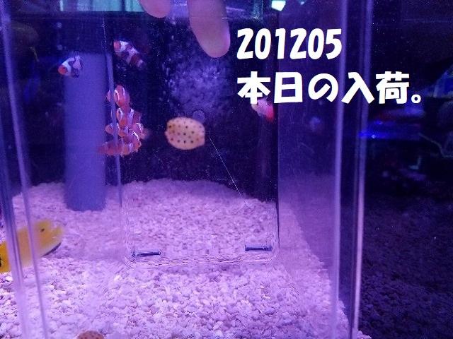 春日井店 海水ブログ 201205