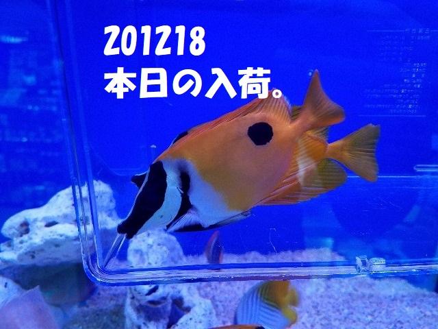 春日井店 海水ブログ 201218
