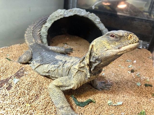 亀・顎髭・蜥蜴@インター爬虫類