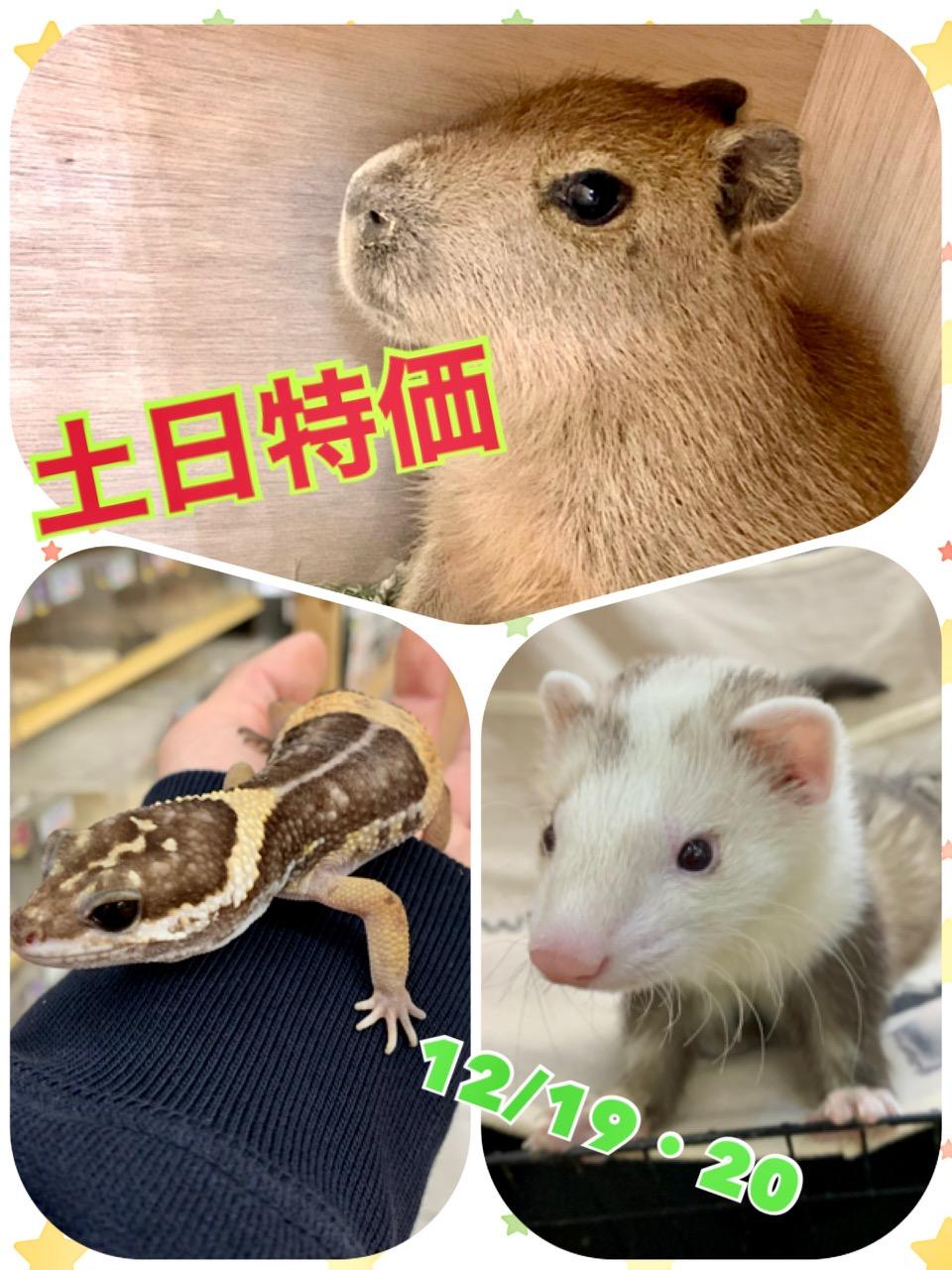 【春ペポニ】19・20日『土日特価』