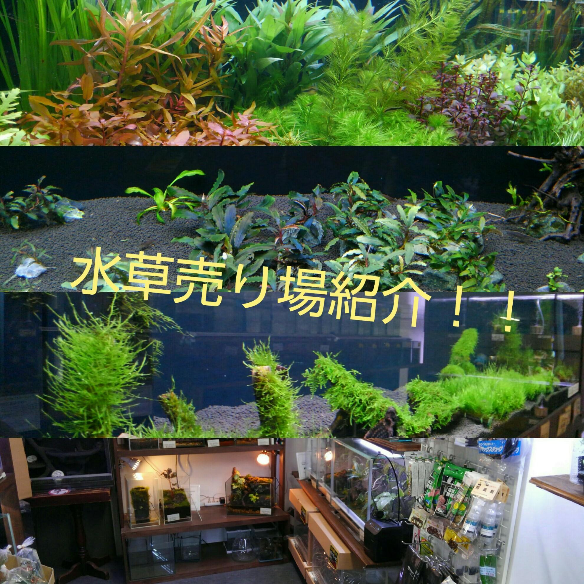 水草、観葉植物、テラリウム、パルダリウム売り場紹介!