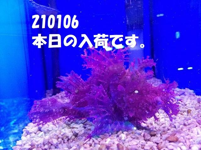 春日井店 海水ブログ 210106