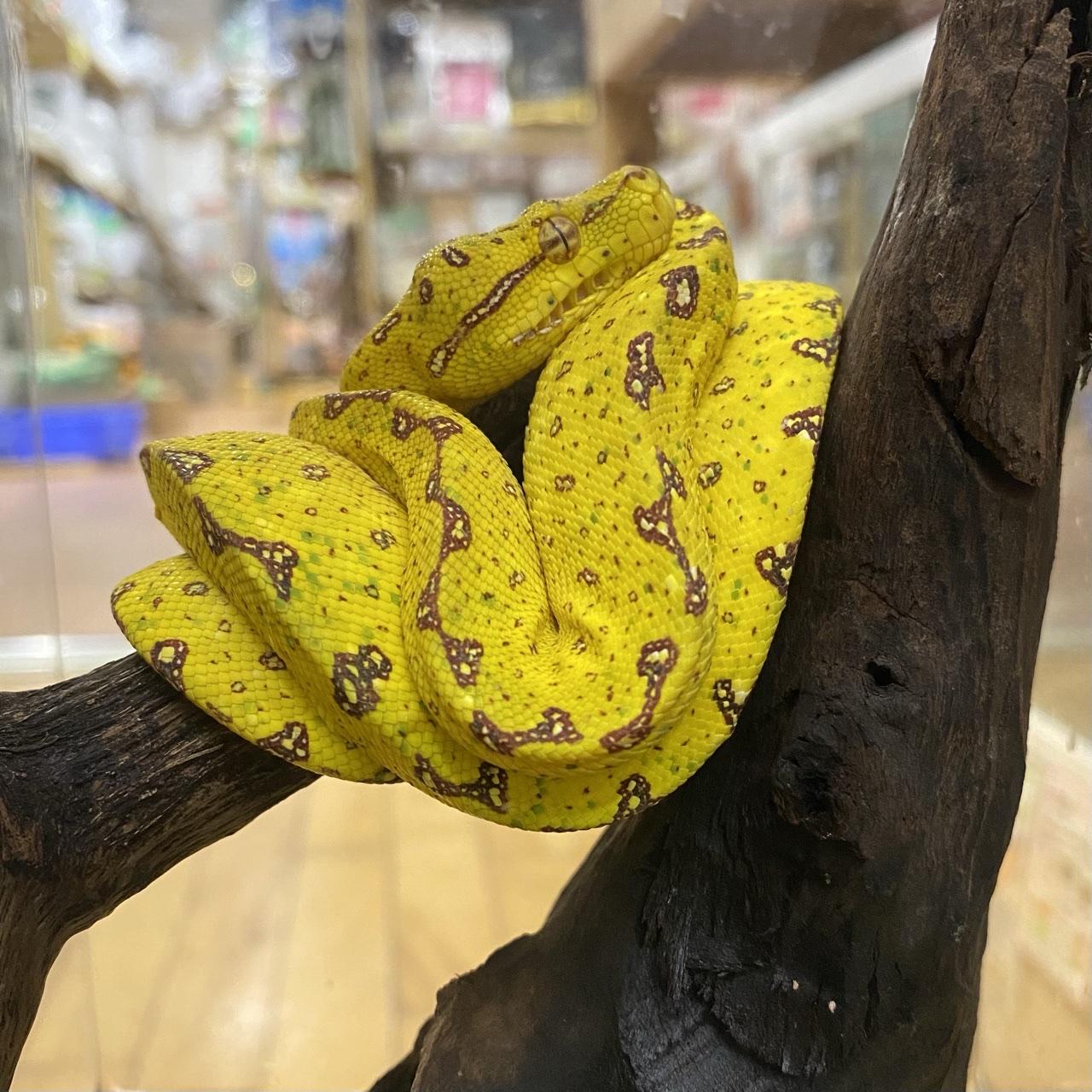 【春ペポニ】いろんなヘビがやってきた!!
