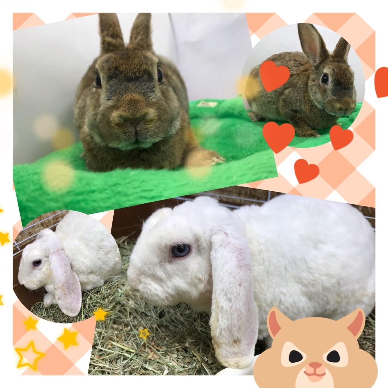 【インター小動物】今更!レアなウサギが揃い踏み!!