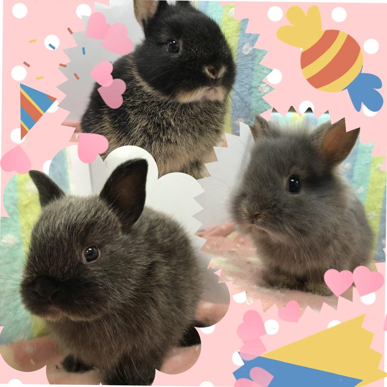 【インター小動物】激かわ!!ウサギ新着てんこ盛り盛り盛りMAX!!!