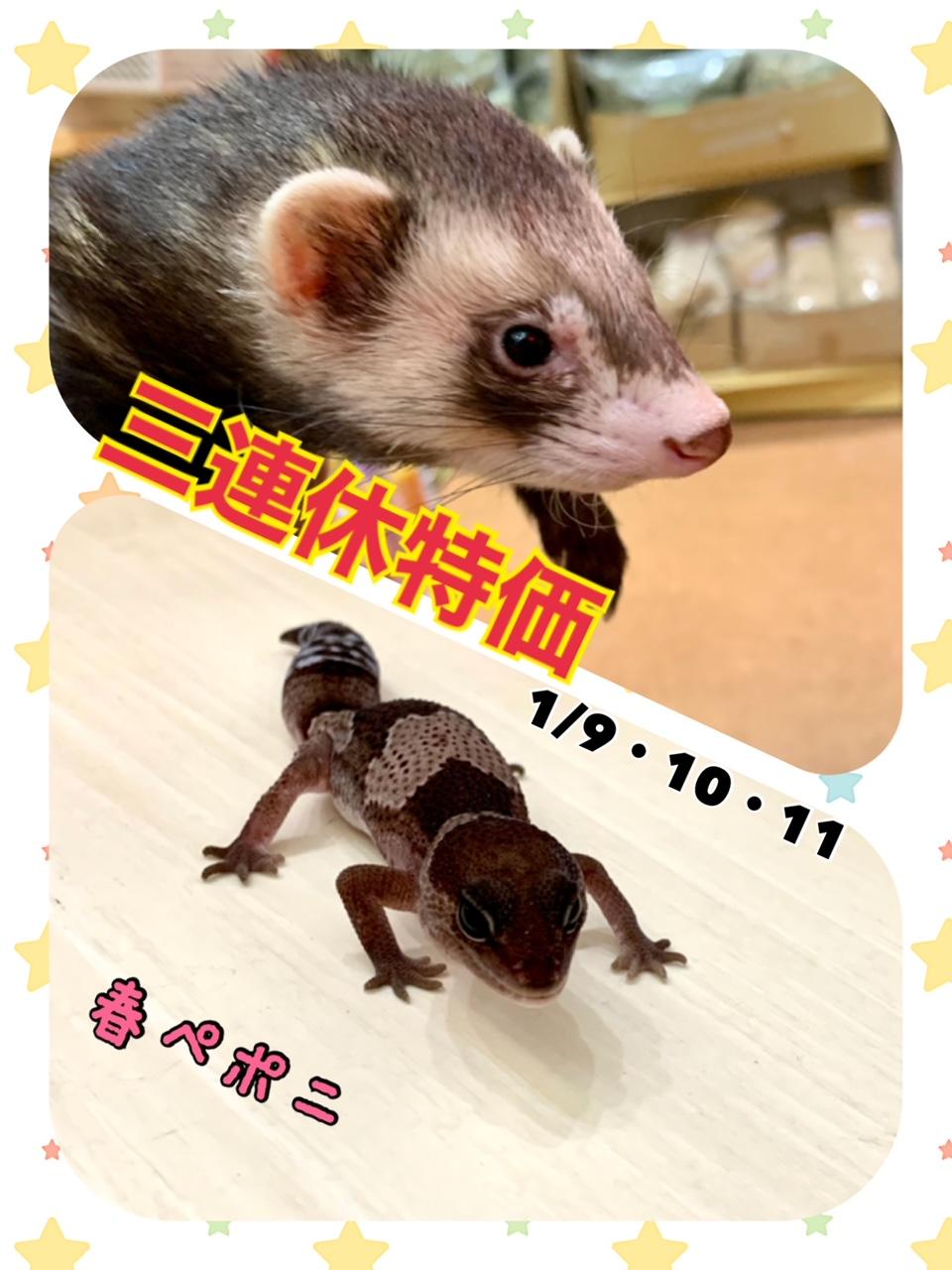 【春ペポニ】成人の日!連休特価!