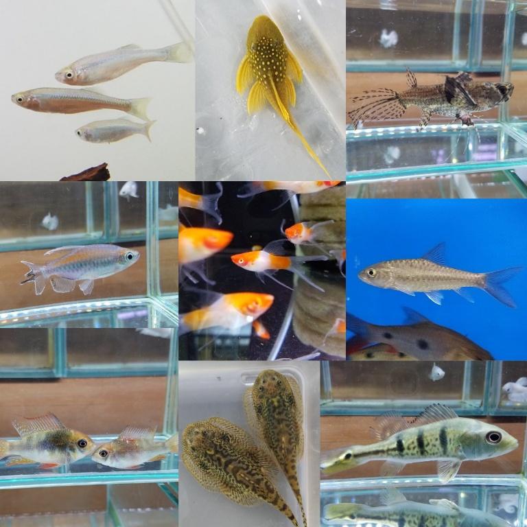 写真アップ完了 春日井熱帯魚