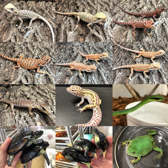 新着生体たくさんきてます!!@インター爬虫類