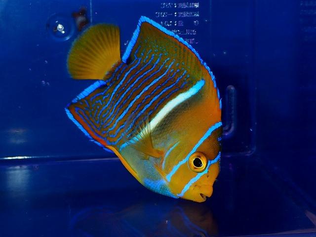 キレイな魚ばかり~♪