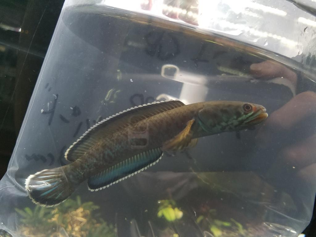 明日から4月!春日井熱帯魚