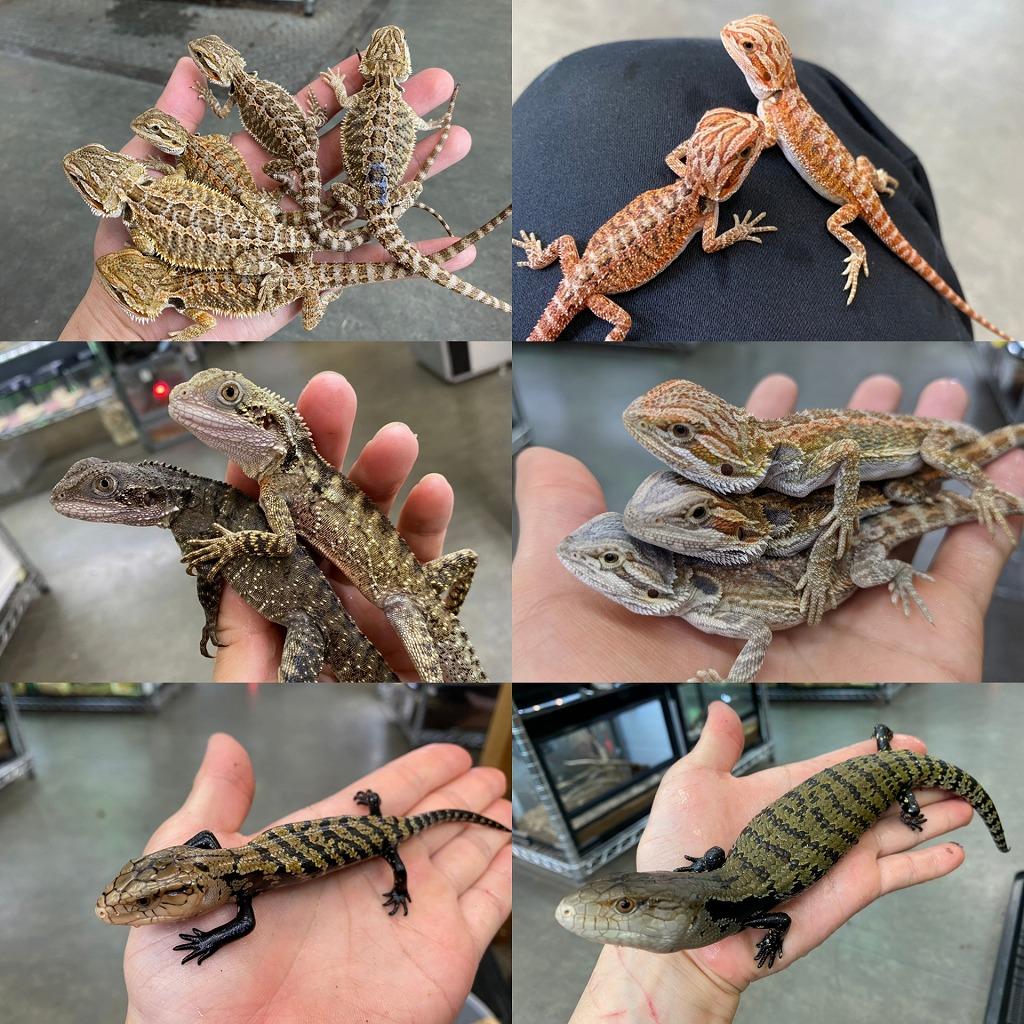 世界の蜥蜴からPart2@みなとペポニ