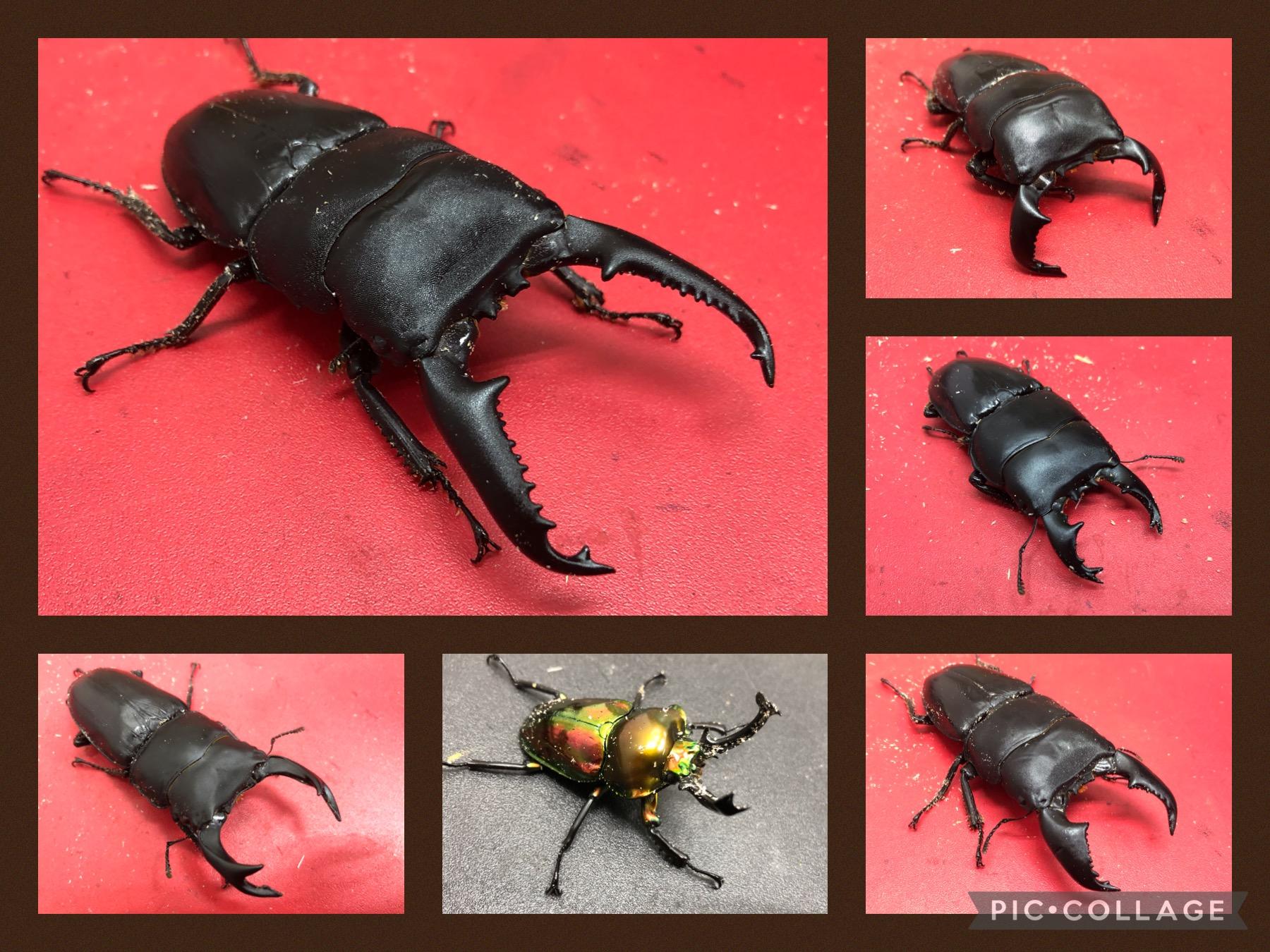 【インター小動物】昆虫シーズン準備開始!