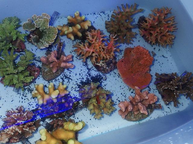サンゴに魚がてんこもり^^