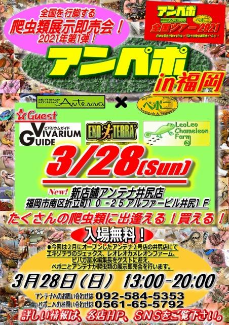 3月28日(日)は『アンペポin福岡』!!@インター爬虫類
