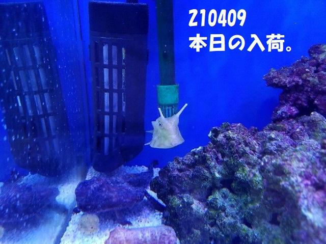 春日井店 海水ブログ 210409