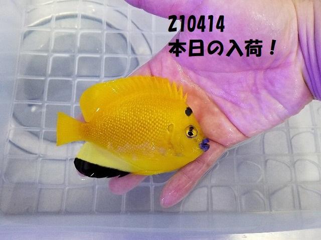 春日井店 海水ブログ 210414