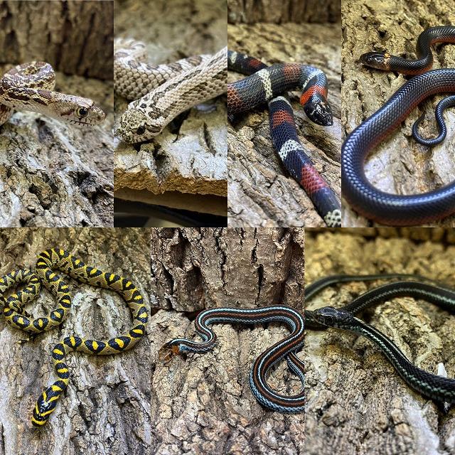 珍蛇が盛りだくさん!@インターペポニ