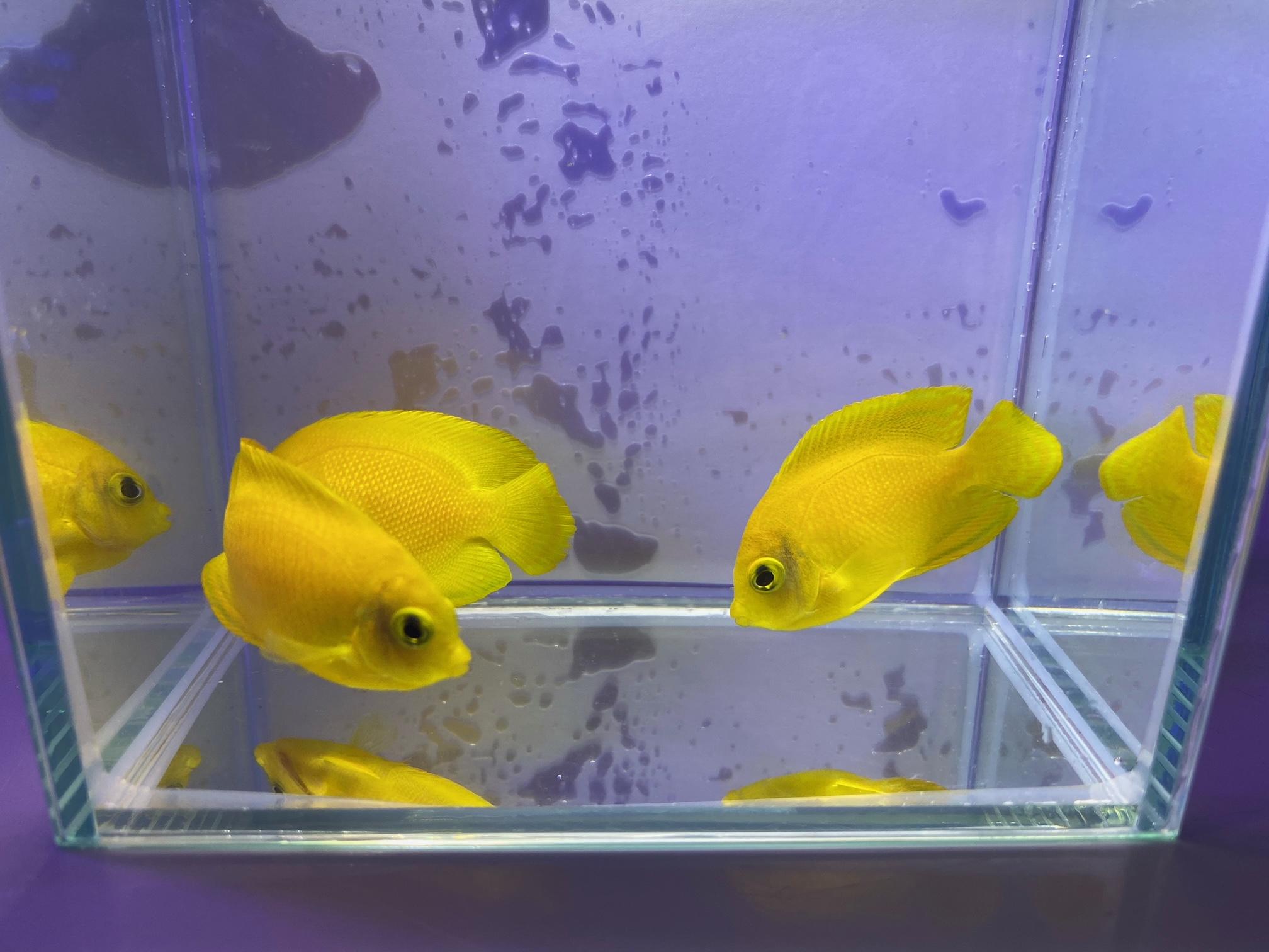 【春日井海水魚】入荷情報🐟