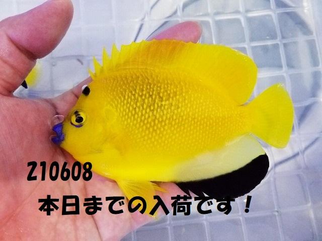 春日井店 海水ブログ 210608