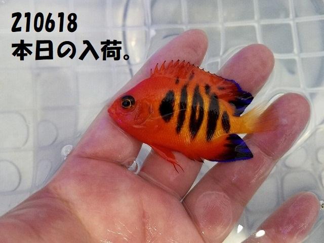 春日井店 海水ブログ 210618
