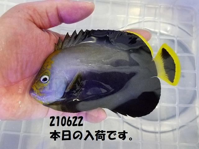 春日井店 海水ブログ 210622