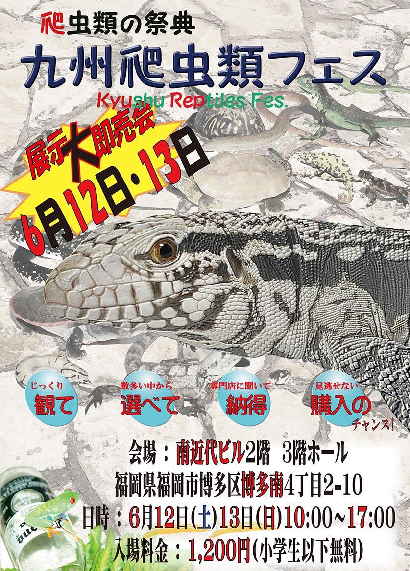 いよいよ迫る九州爬虫類フェス!生体リクエストを宜しくお願い致します!