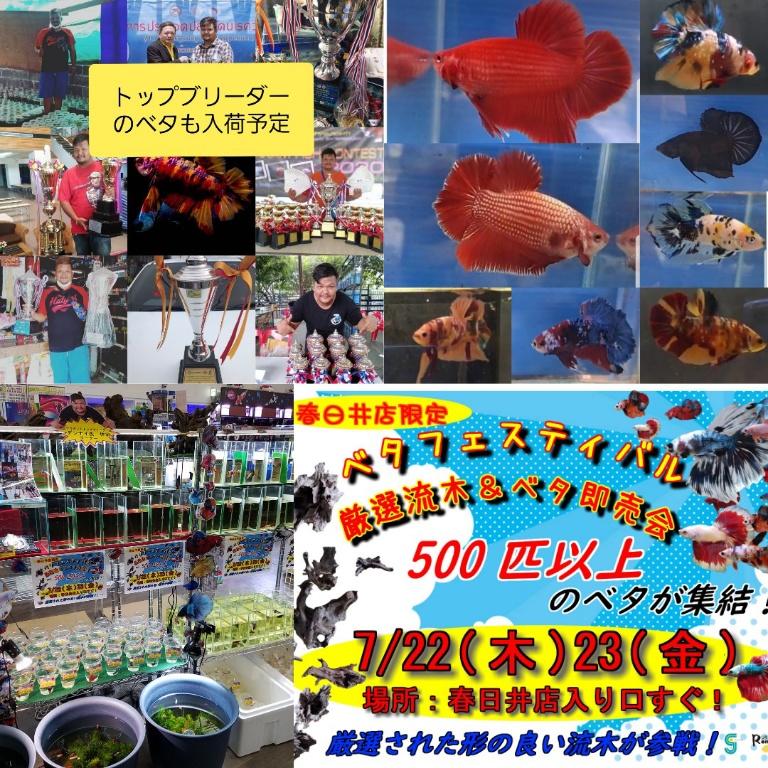 春日井ベタフェスティバル開催!