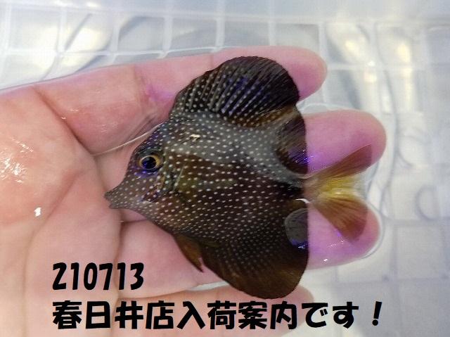 春日井店 海水ブログ 210713