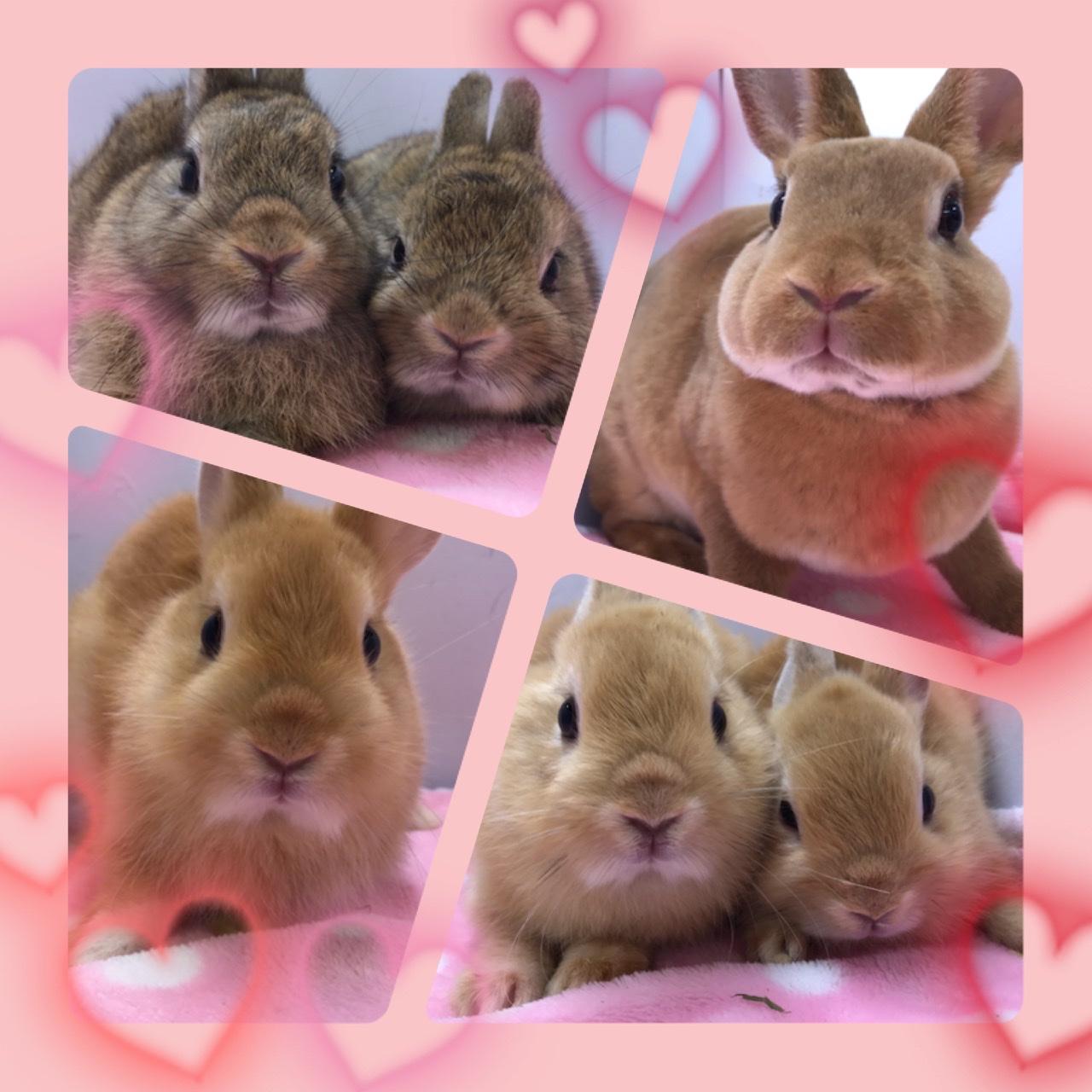 【インター小動物】ウサギ幼稚園開園ッ!!パート③